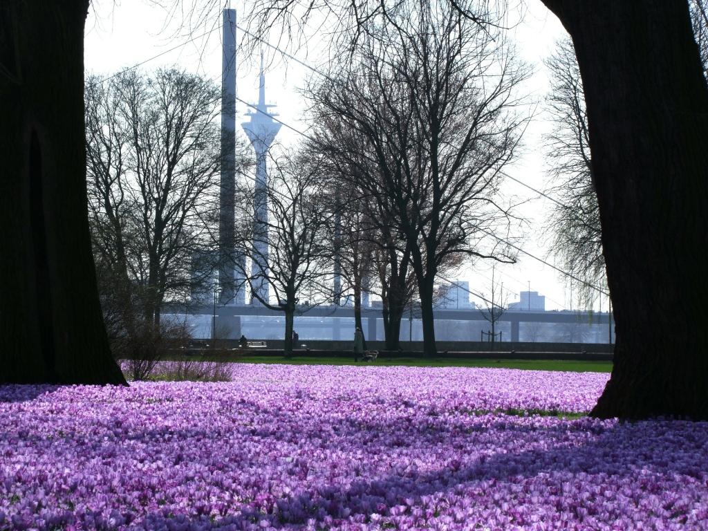 Sightseeing Düsseldorf - Rheinpark